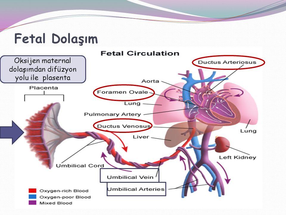 Oksijen maternal dolaşımdan difüzyon yolu ile plasenta