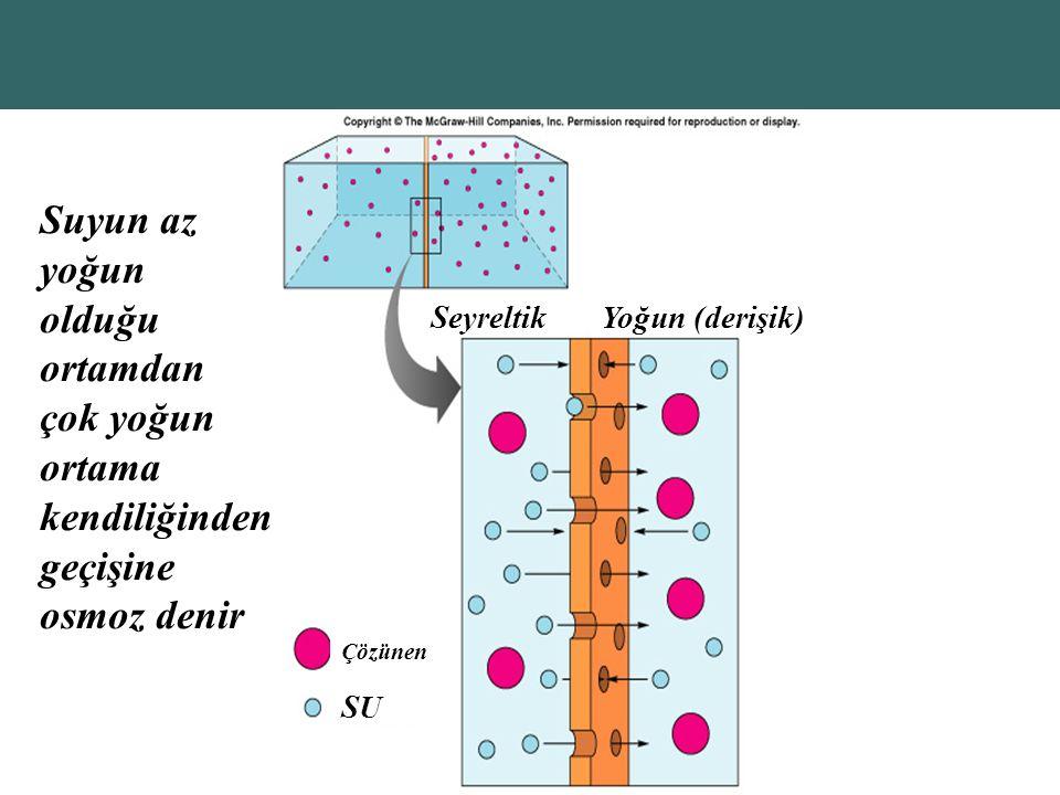 Seyreltik Yoğun (derişik) Çözünen. SU. Suyun az yoğun olduğu ortamdan çok yoğun ortama kendiliğinden geçişine osmoz denir.