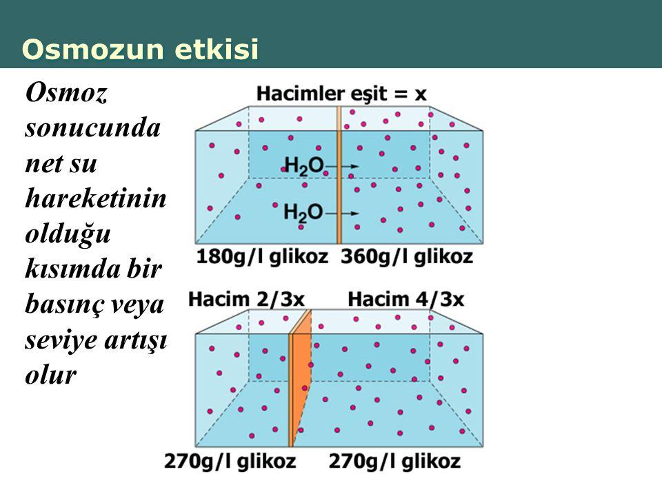 Osmozun etkisi Osmoz sonucunda net su hareketinin olduğu kısımda bir basınç veya seviye artışı olur.