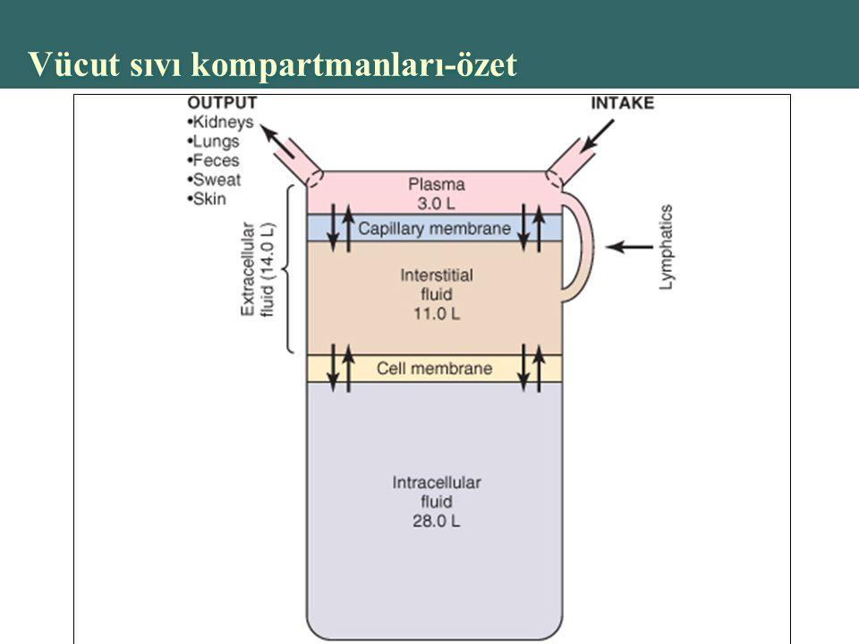 Vücut sıvı kompartmanları-özet