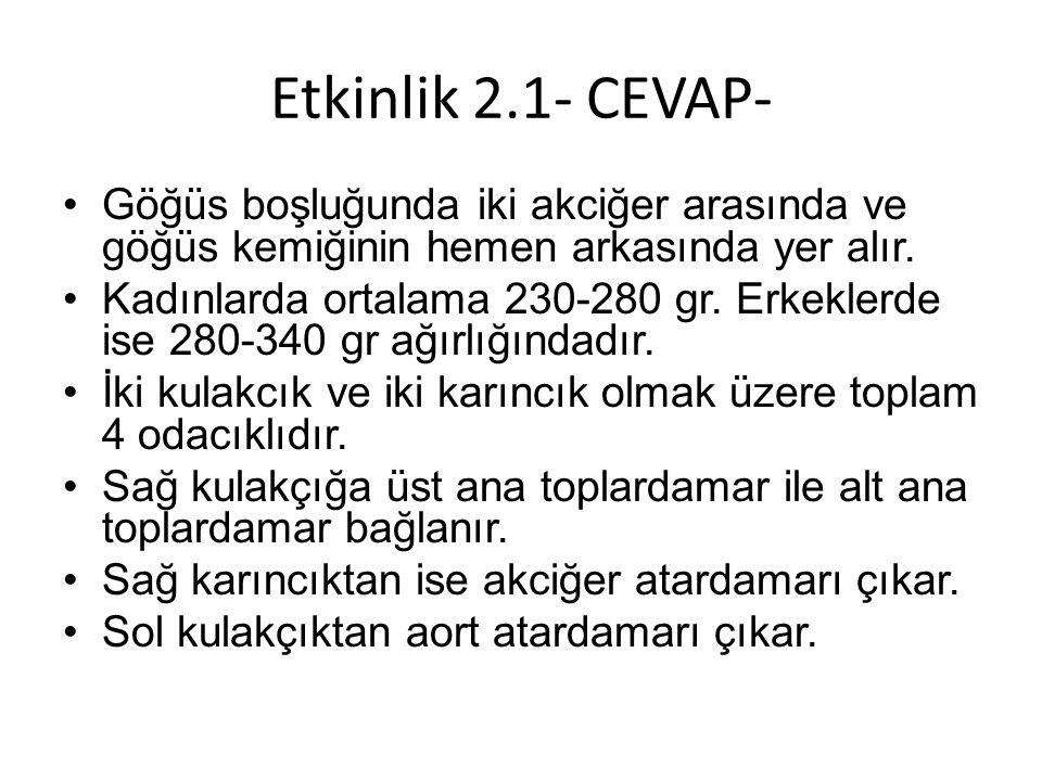 Etkinlik 2.1- CEVAP- Göğüs boşluğunda iki akciğer arasında ve göğüs kemiğinin hemen arkasında yer alır.