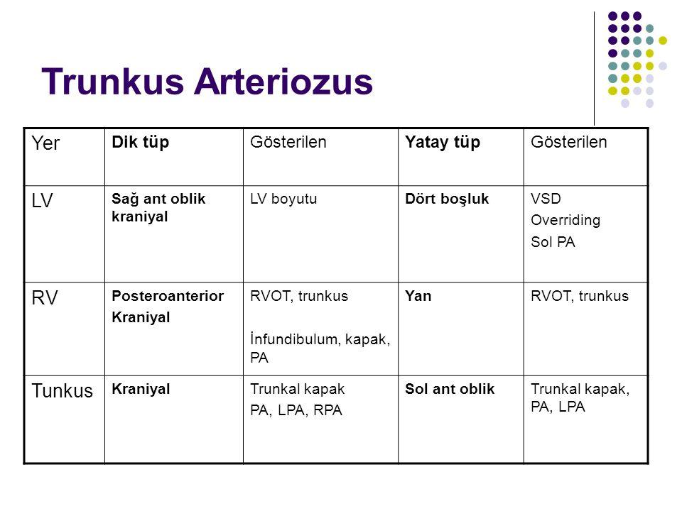 Trunkus Arteriozus Yer LV RV Tunkus Dik tüp Gösterilen Yatay tüp