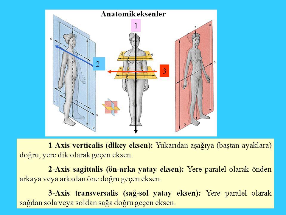 Anatomik eksenler 1. 2. 3. 1-Axis verticalis (dikey eksen): Yukarıdan aşağıya (baştan-ayaklara) doğru, yere dik olarak geçen eksen.