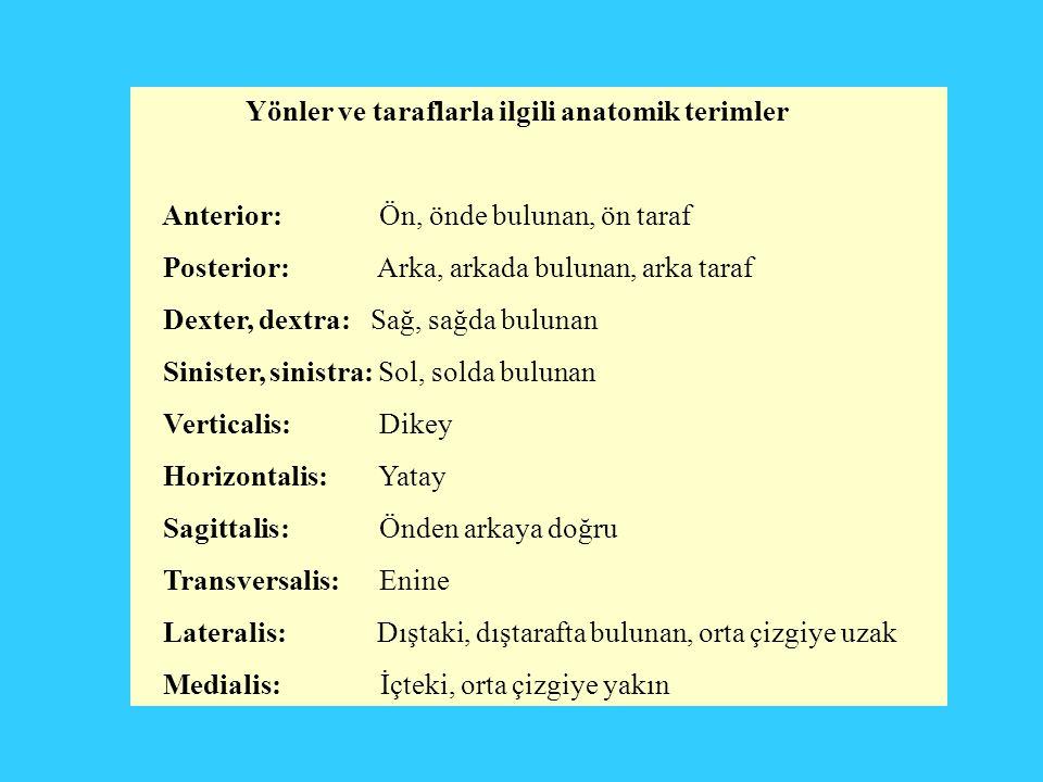 Yönler ve taraflarla ilgili anatomik terimler