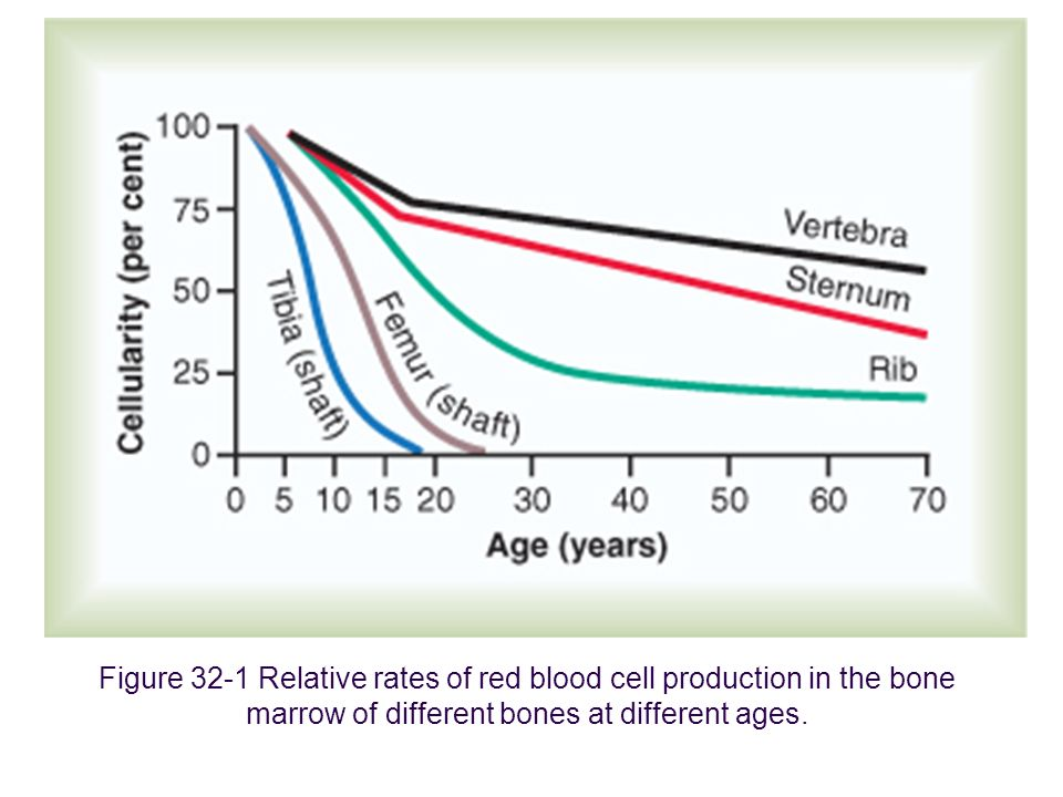 1999 Figure 32-1 Relative rates of red blood cell production in the bone marrow of different bones at different ages.