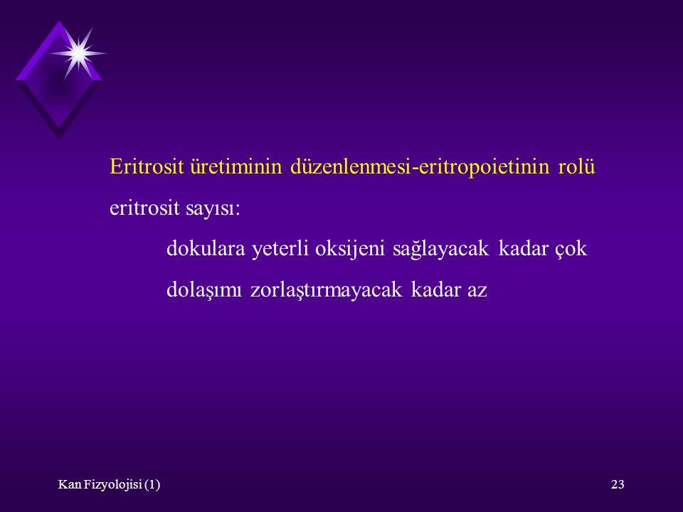 Eritrosit üretiminin düzenlenmesi-eritropoietinin rolü