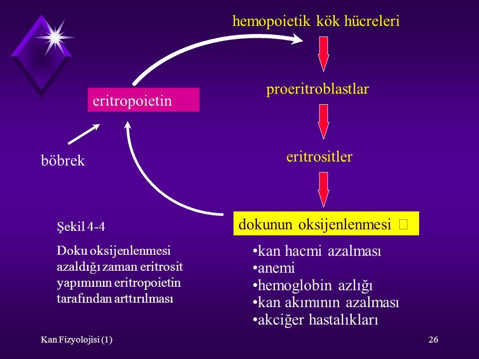 hemopoietik kök hücreleri