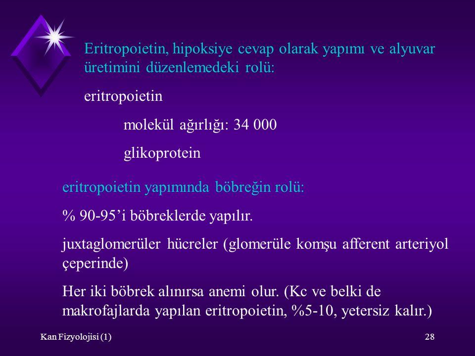 eritropoietin yapımında böbreğin rolü: % 90-95'i böbreklerde yapılır.