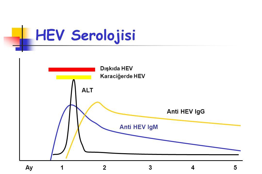 HEV Serolojisi ALT Anti HEV IgG Anti HEV IgM Ay 1 2 3 4 5 Dışkıda HEV