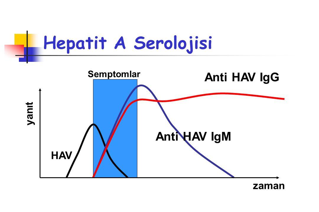 Hepatit A Serolojisi Anti HAV IgG Anti HAV IgM HAV yanıt zaman