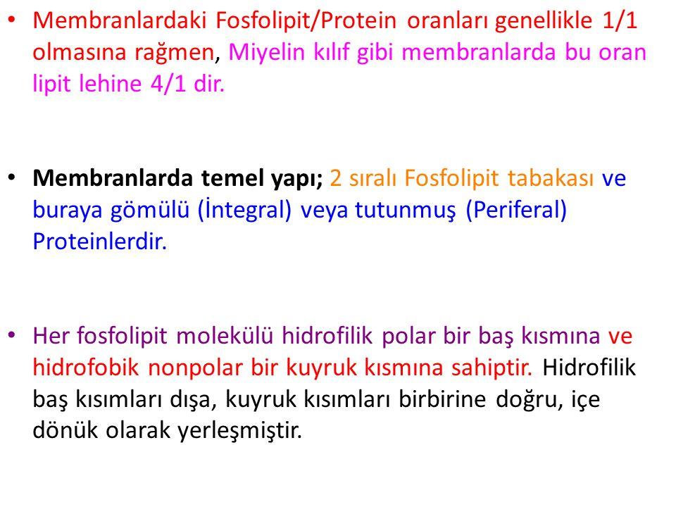 Membranlardaki Fosfolipit/Protein oranları genellikle 1/1 olmasına rağmen, Miyelin kılıf gibi membranlarda bu oran lipit lehine 4/1 dir.