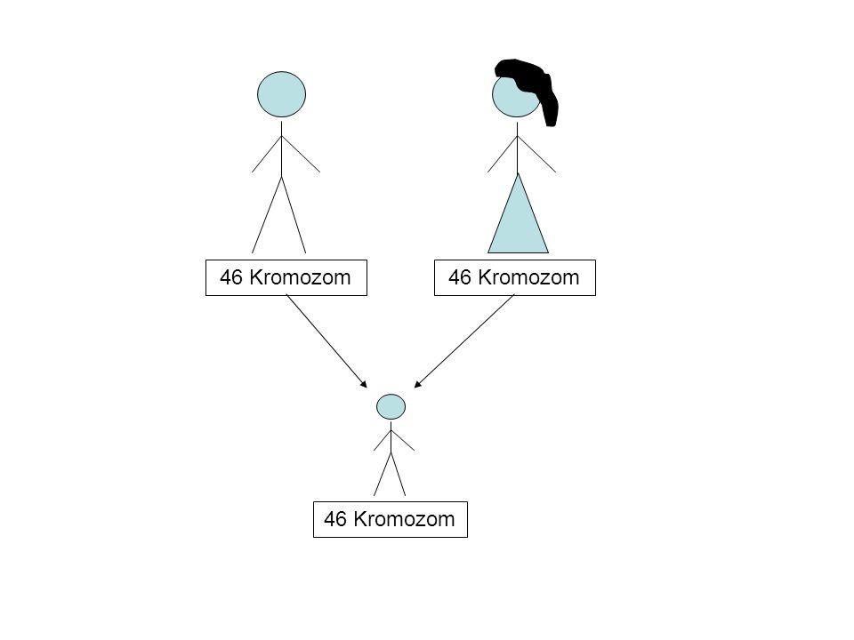 46 Kromozom 46 Kromozom 46 Kromozom