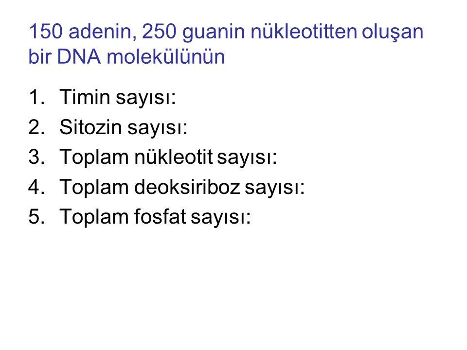150 adenin, 250 guanin nükleotitten oluşan bir DNA molekülünün