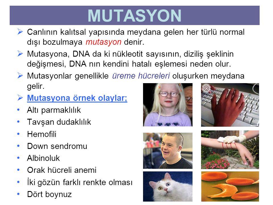 MUTASYON Canlının kalıtsal yapısında meydana gelen her türlü normal dışı bozulmaya mutasyon denir.