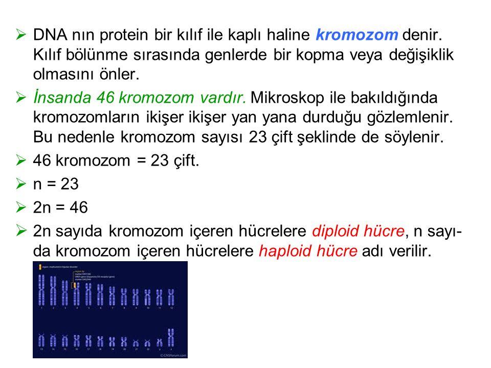 DNA nın protein bir kılıf ile kaplı haline kromozom denir