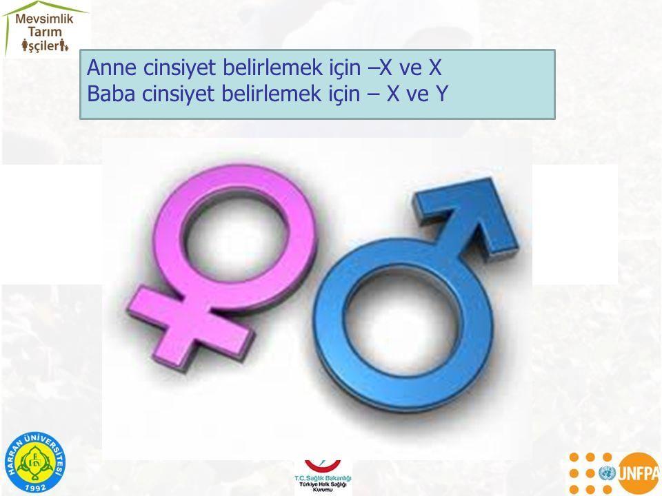 Anne cinsiyet belirlemek için –X ve X
