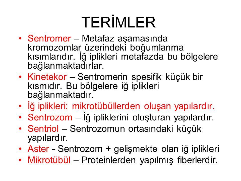 TERİMLER Sentromer – Metafaz aşamasında kromozomlar üzerindeki boğumlanma kısımlarıdır. İğ iplikleri metafazda bu bölgelere bağlanmaktadırlar.