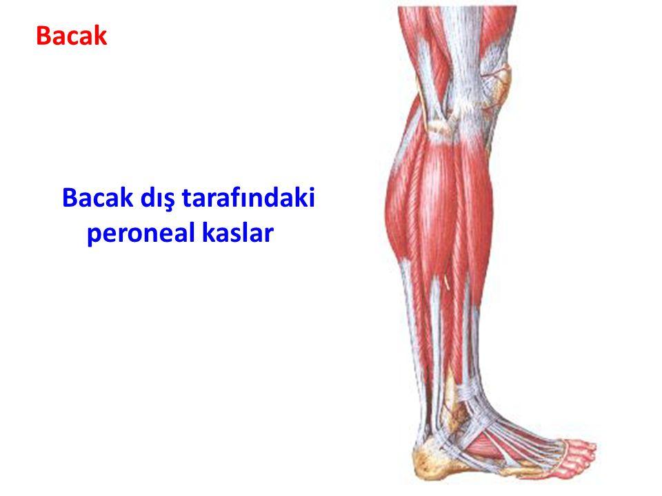 Bacak Bacak dış tarafındaki peroneal kaslar