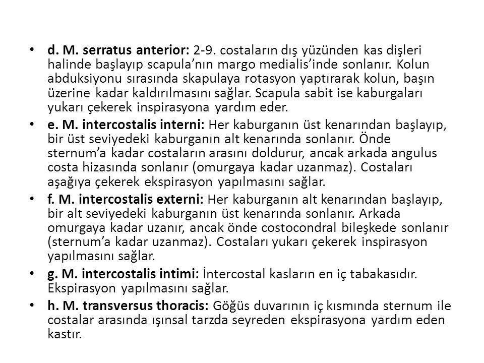 d. M. serratus anterior: 2-9
