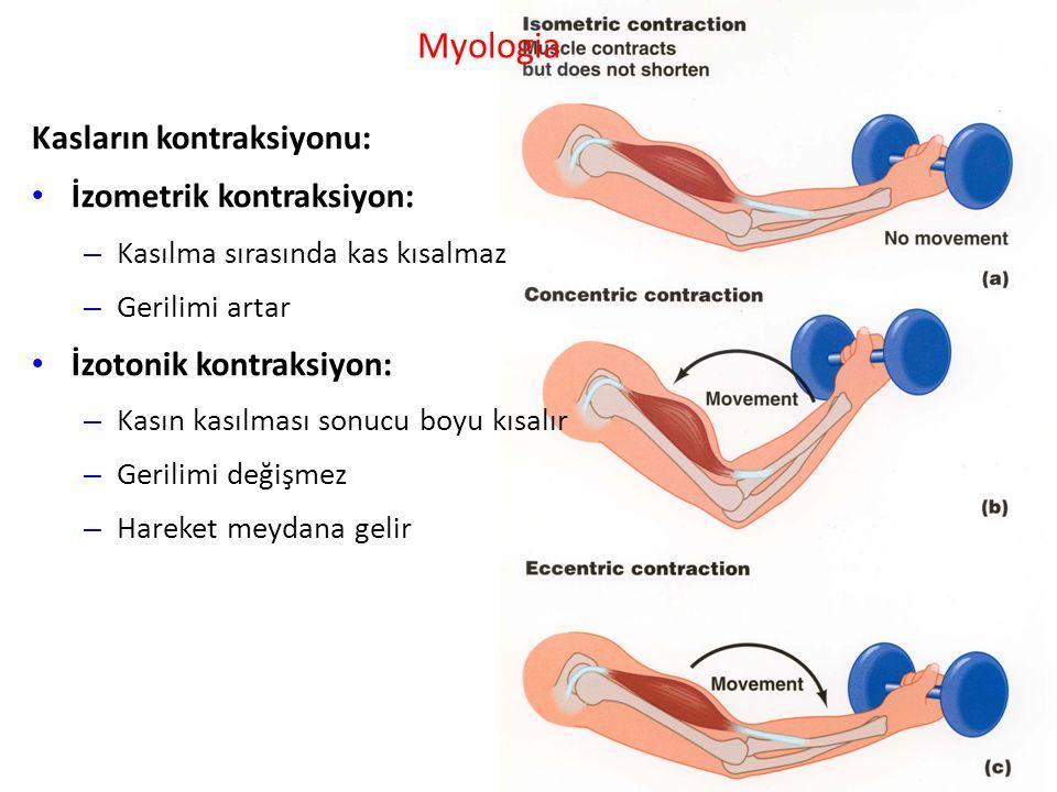 Myologia Kasların kontraksiyonu: İzometrik kontraksiyon: