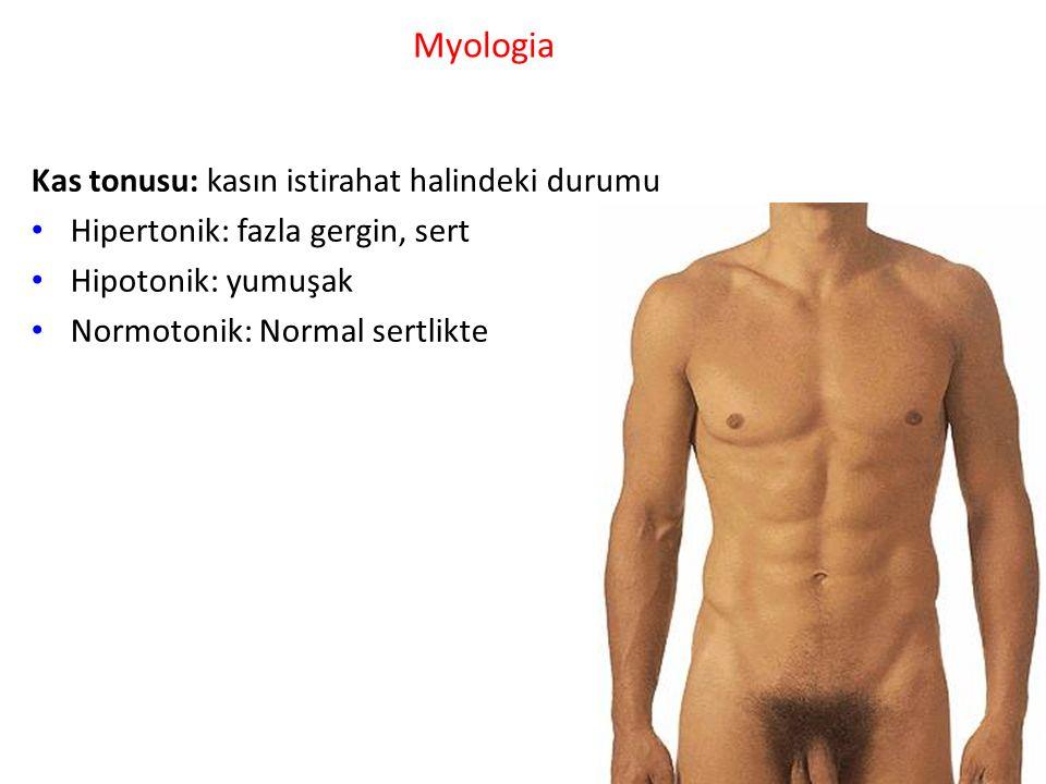 Myologia Kas tonusu: kasın istirahat halindeki durumu
