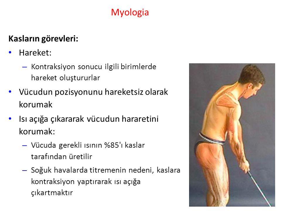 Myologia Kasların görevleri: Hareket: