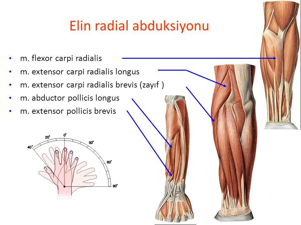 Elin radial abduksiyonu
