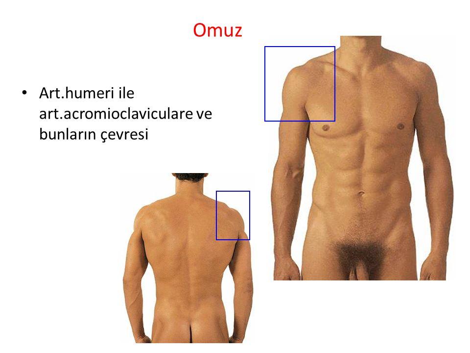 Omuz Art.humeri ile art.acromioclaviculare ve bunların çevresi