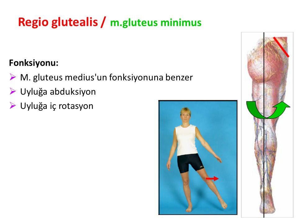 Regio glutealis / m.gluteus minimus