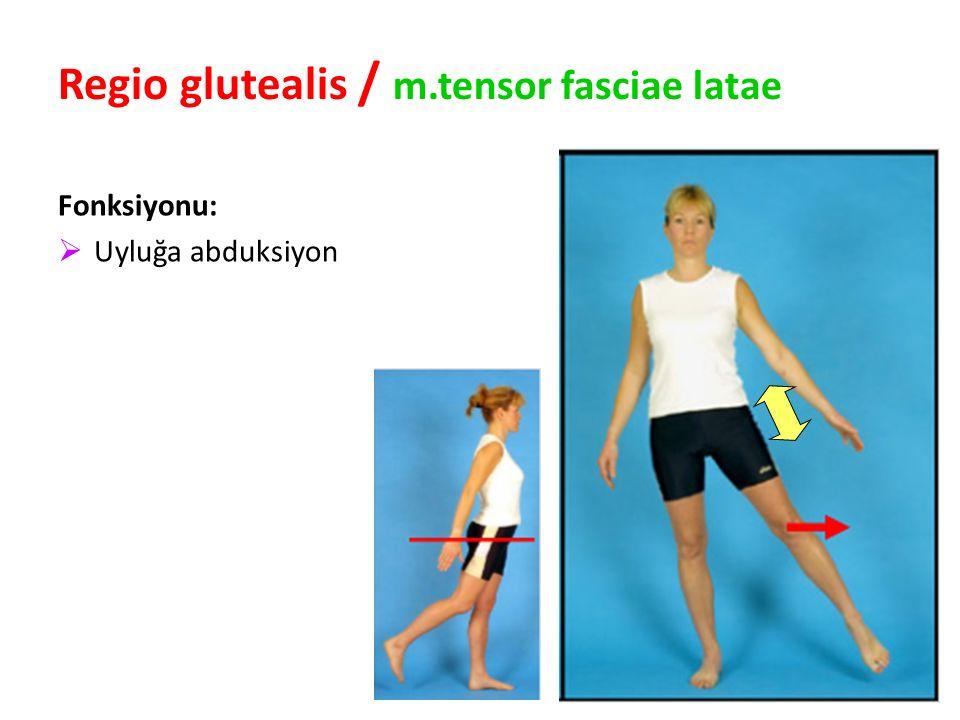 Regio glutealis / m.tensor fasciae latae