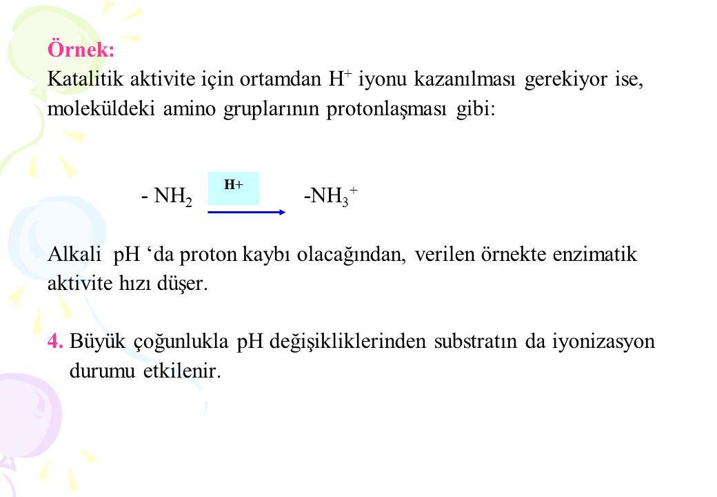 Enzimler kolaylıkla denatürasyona uğrarlar: