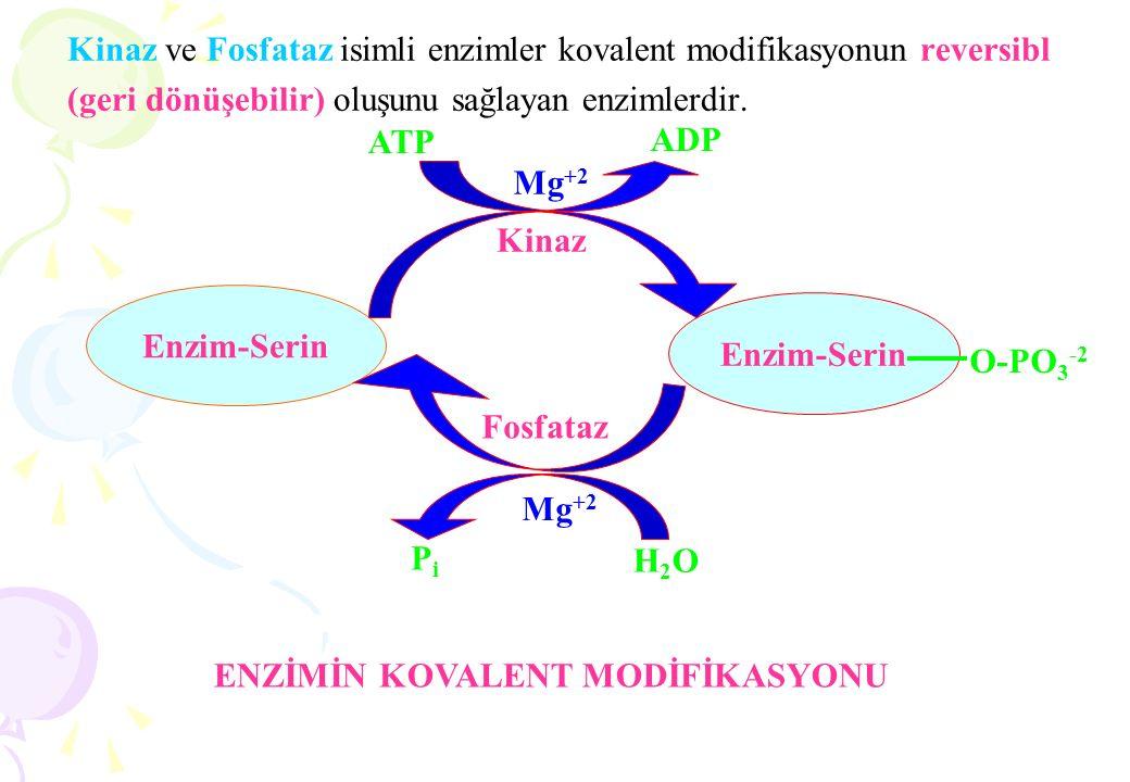 Km Değerinin Bilinmesinin Önemi