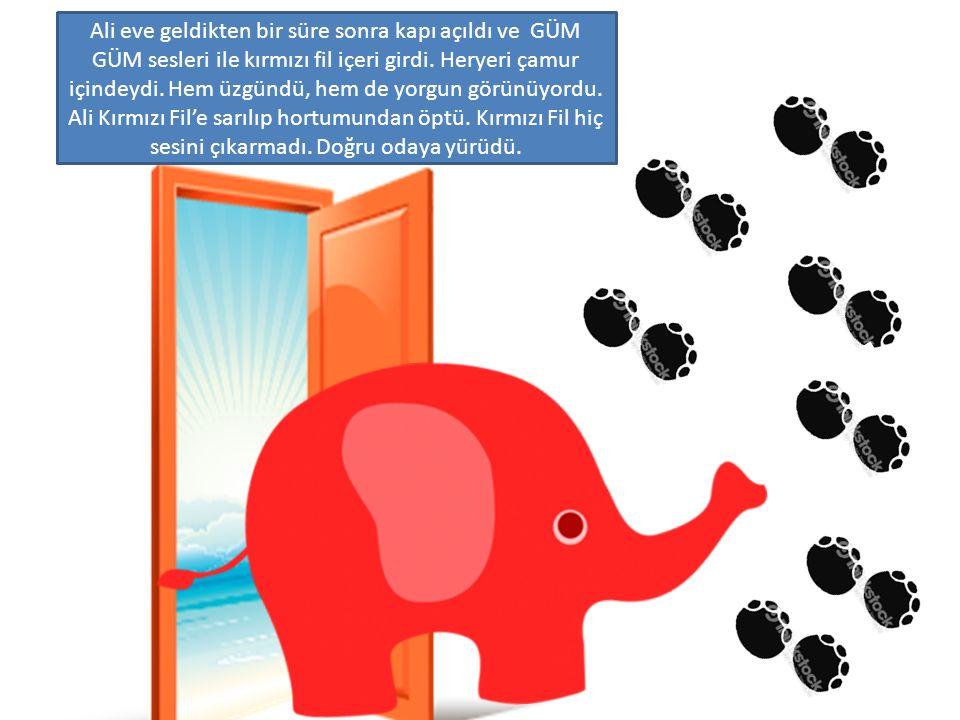 Ali eve geldikten bir süre sonra kapı açıldı ve GÜM GÜM sesleri ile kırmızı fil içeri girdi.