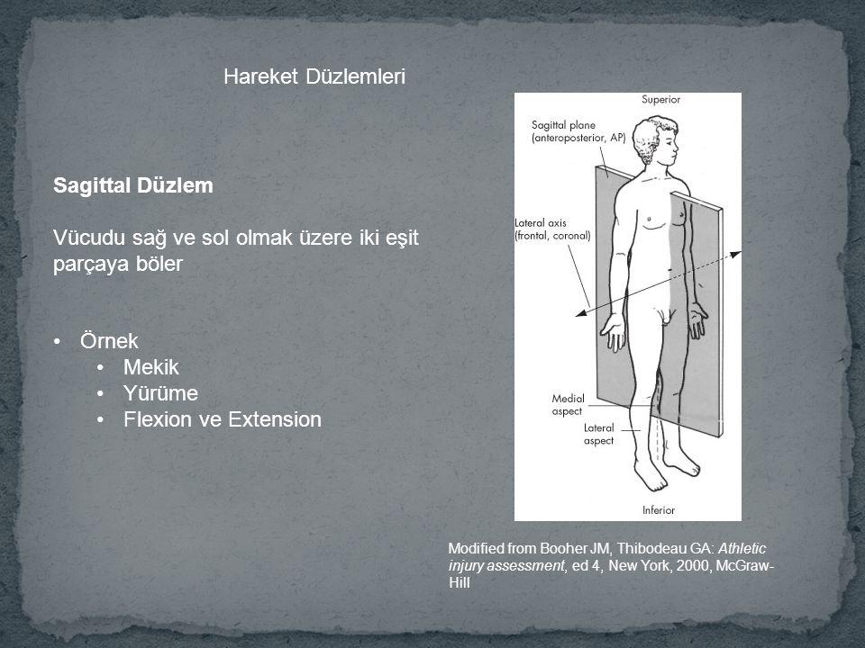 Vücudu sağ ve sol olmak üzere iki eşit parçaya böler
