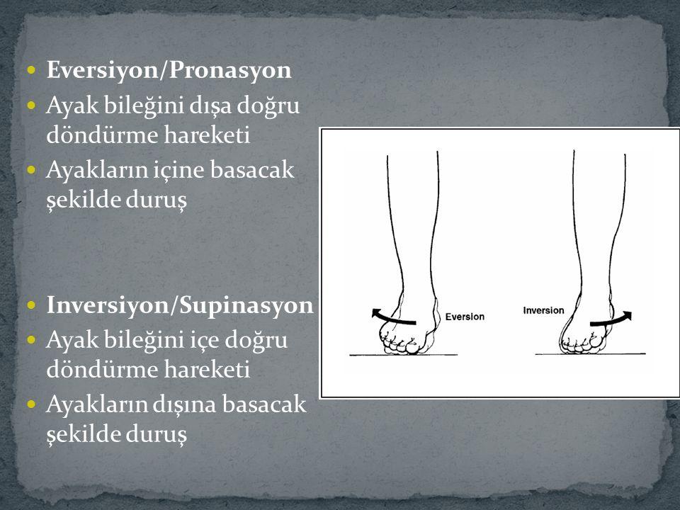 Eversiyon/Pronasyon Ayak bileğini dışa doğru döndürme hareketi. Ayakların içine basacak şekilde duruş.