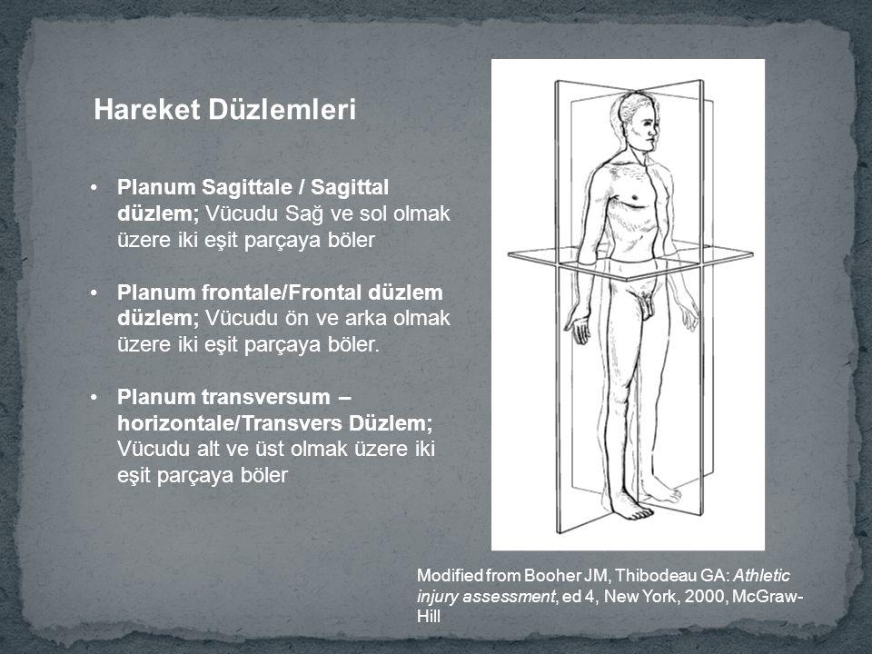 Hareket Düzlemleri Planum Sagittale / Sagittal düzlem; Vücudu Sağ ve sol olmak üzere iki eşit parçaya böler.