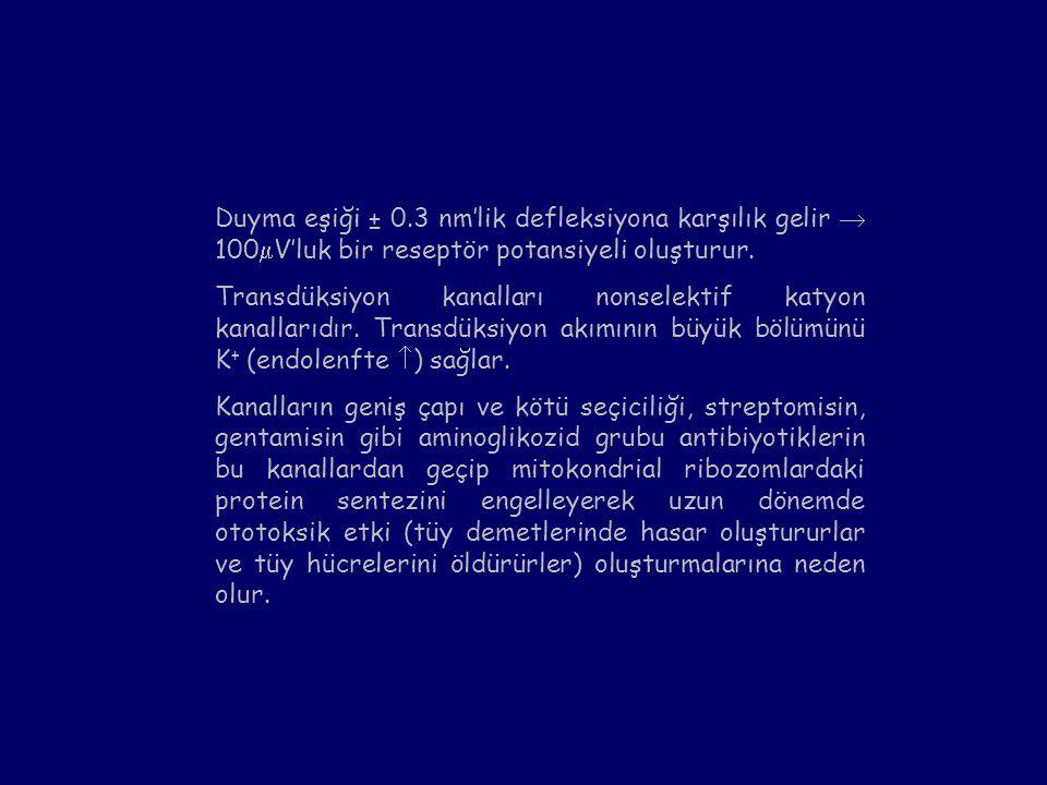 Duyma eşiği ± 0.3 nm'lik defleksiyona karşılık gelir  100V'luk bir reseptör potansiyeli oluşturur.