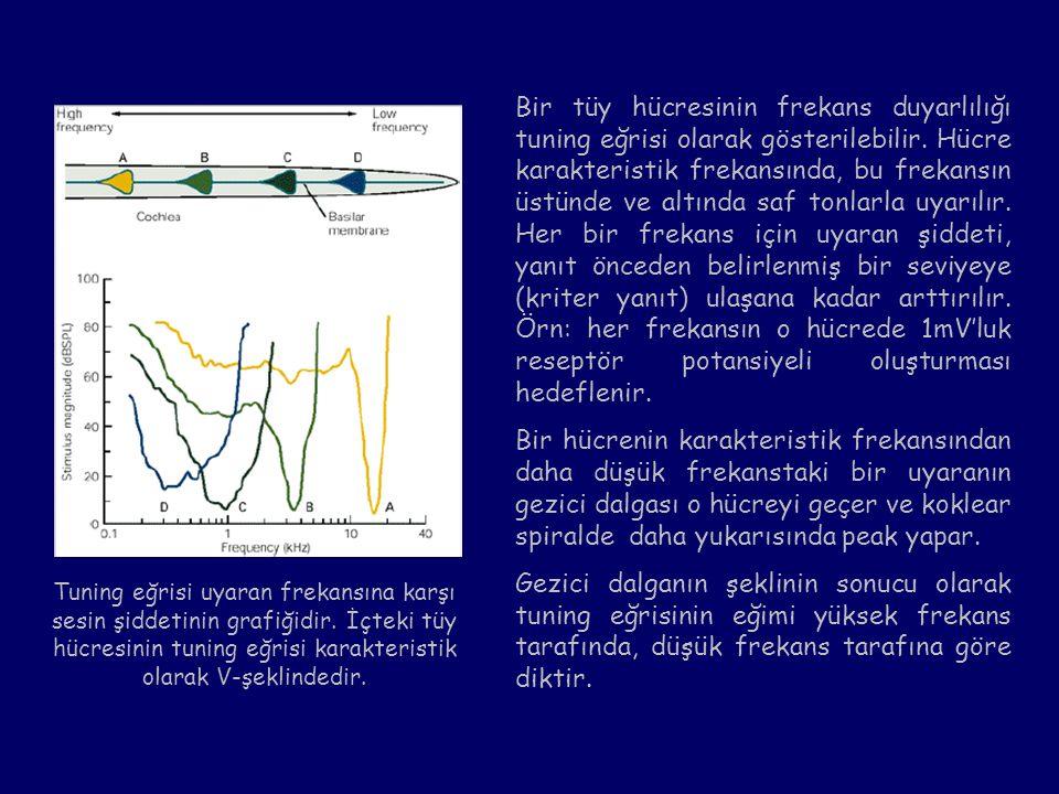 Bir tüy hücresinin frekans duyarlılığı tuning eğrisi olarak gösterilebilir. Hücre karakteristik frekansında, bu frekansın üstünde ve altında saf tonlarla uyarılır. Her bir frekans için uyaran şiddeti, yanıt önceden belirlenmiş bir seviyeye (kriter yanıt) ulaşana kadar arttırılır. Örn: her frekansın o hücrede 1mV'luk reseptör potansiyeli oluşturması hedeflenir.