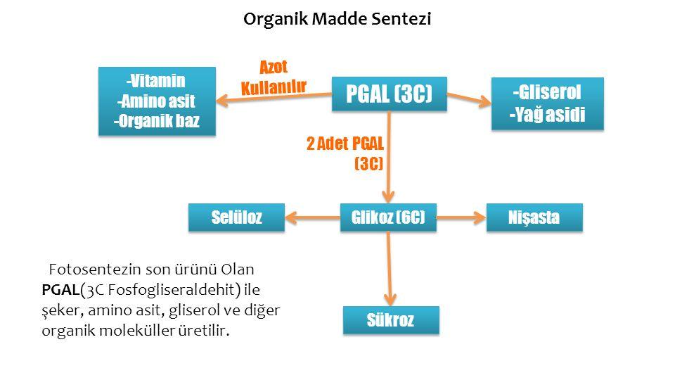 PGAL (3C) Organik Madde Sentezi -Gliserol -Yağ asidi Azot Kullanılır