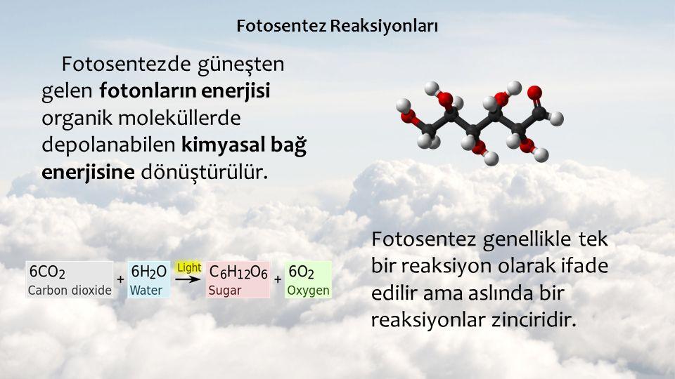 Fotosentez Reaksiyonları