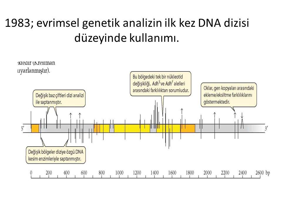1983; evrimsel genetik analizin ilk kez DNA dizisi düzeyinde kullanımı.