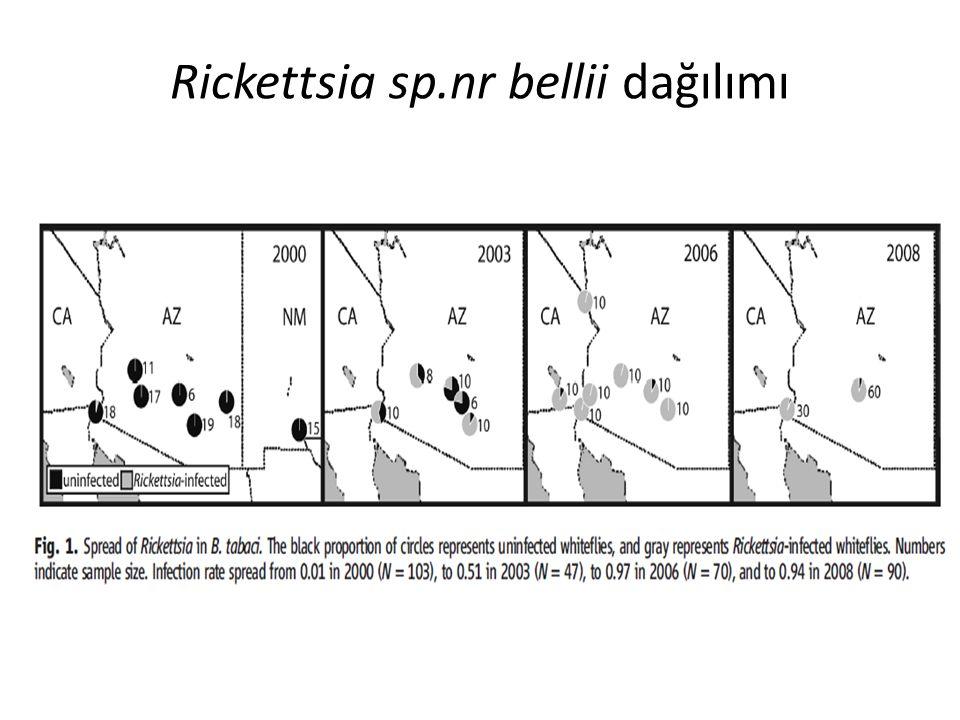 Rickettsia sp.nr bellii dağılımı