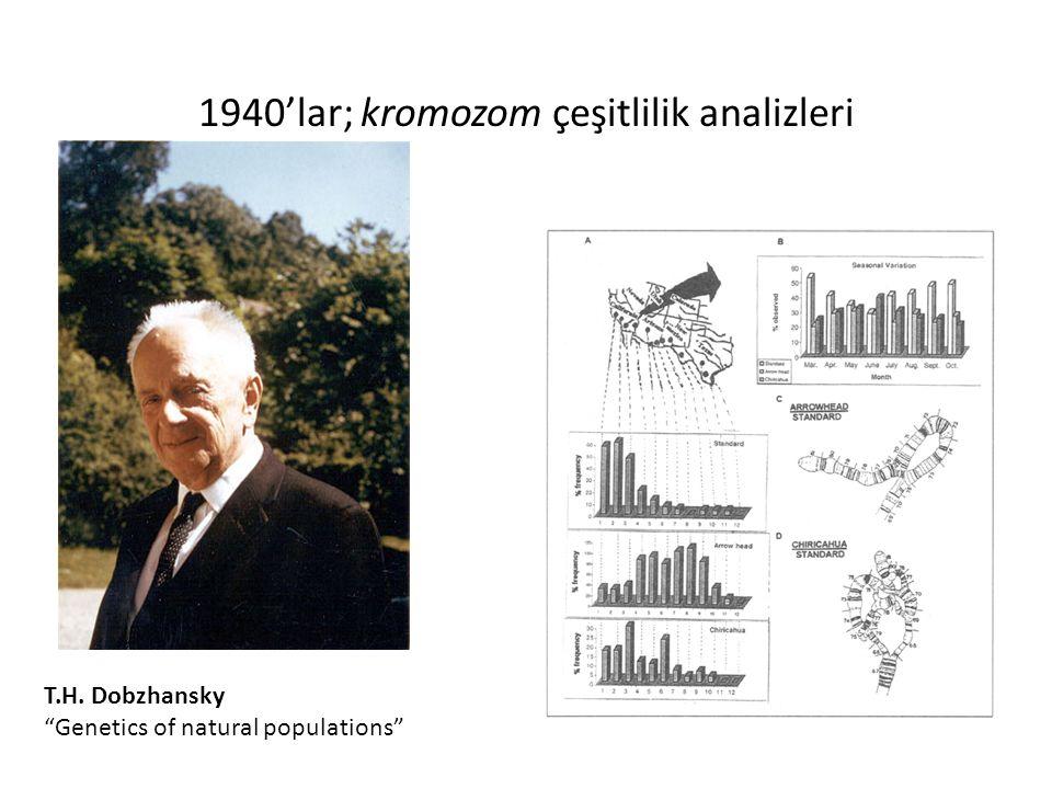 1940'lar; kromozom çeşitlilik analizleri