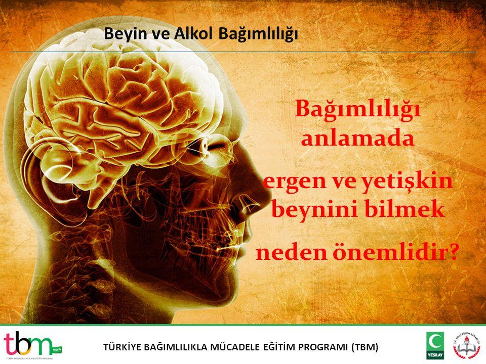 ergen ve yetişkin beynini bilmek