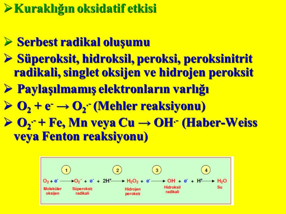 Kuraklığın oksidatif etkisi