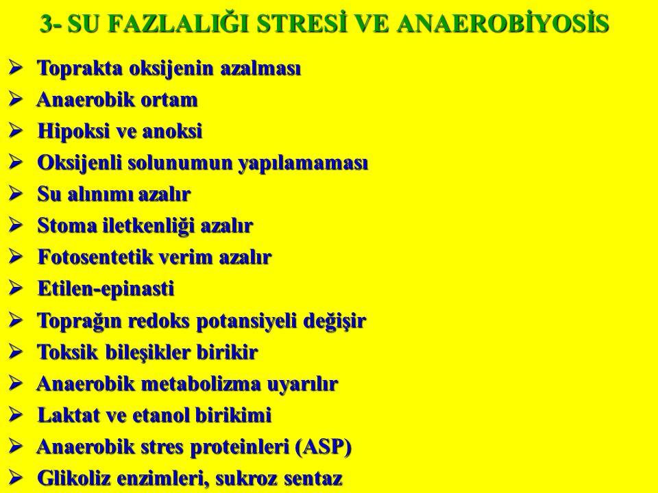 3- SU FAZLALIĞI STRESİ VE ANAEROBİYOSİS