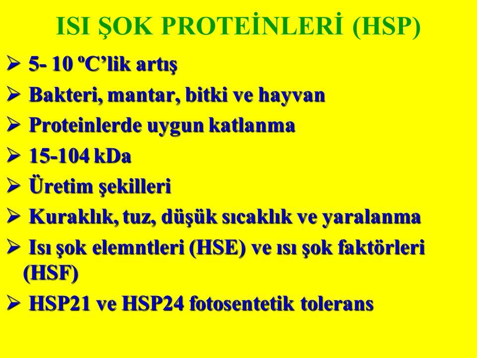 ISI ŞOK PROTEİNLERİ (HSP)