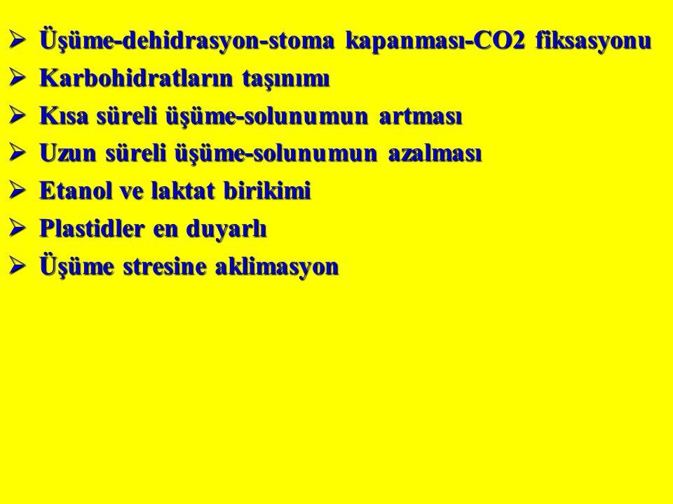 Üşüme-dehidrasyon-stoma kapanması-CO2 fiksasyonu