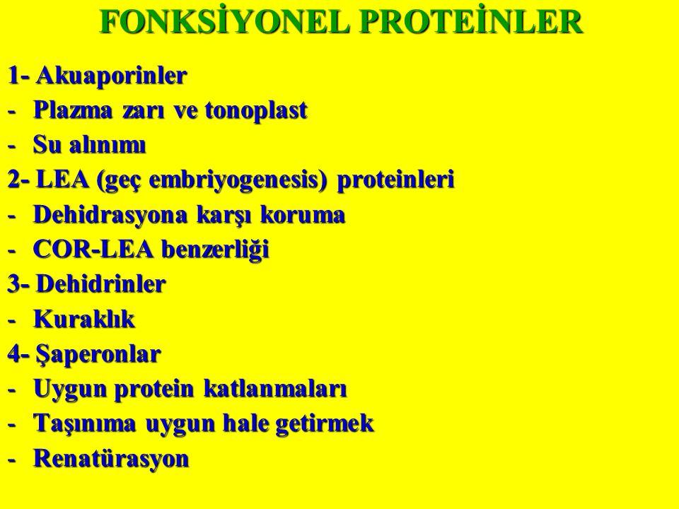FONKSİYONEL PROTEİNLER
