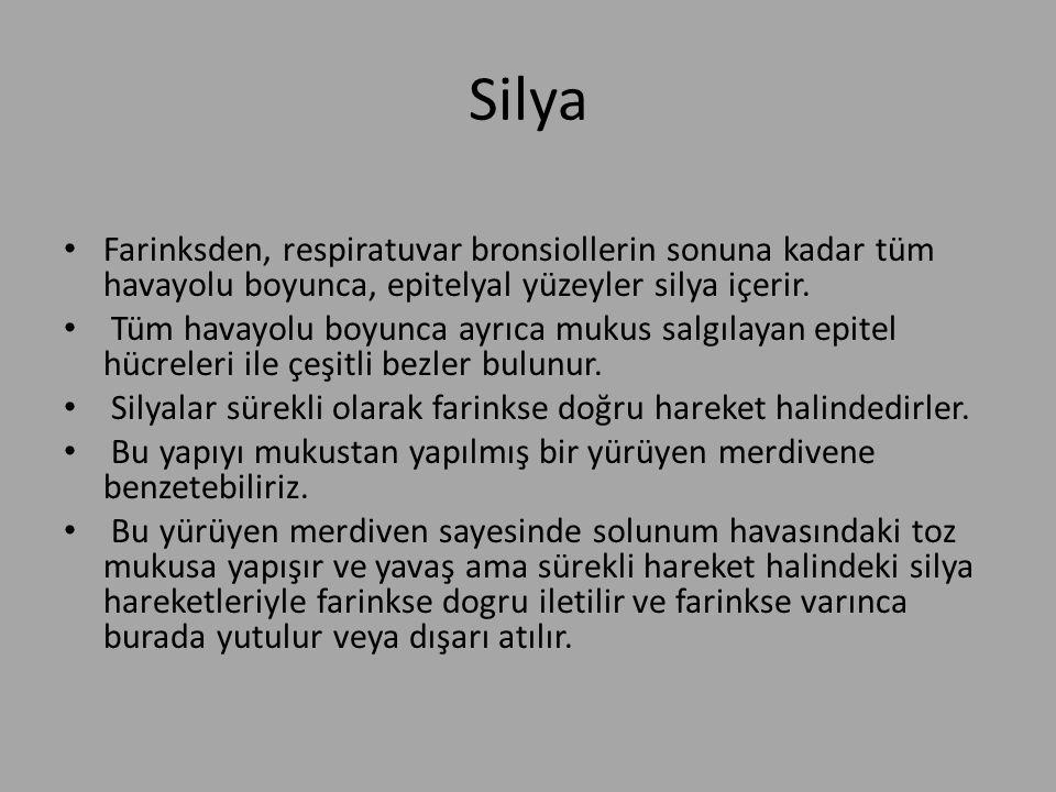 Silya Farinksden, respiratuvar bronsiollerin sonuna kadar tüm havayolu boyunca, epitelyal yüzeyler silya içerir.